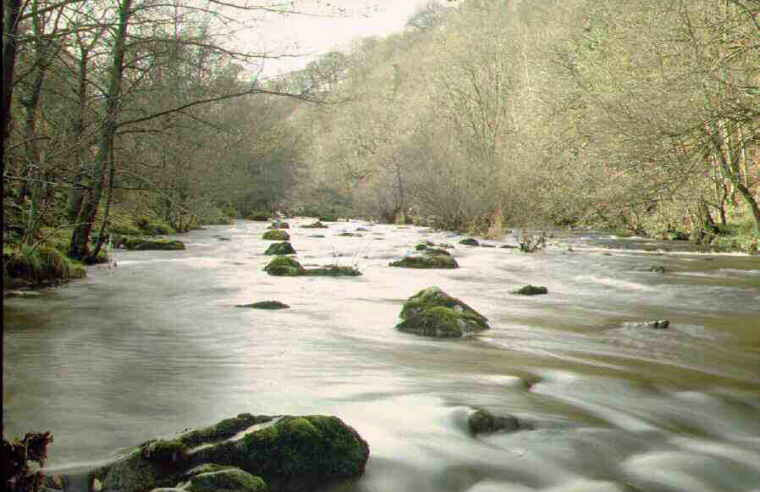 FLY FISHING THE RIVER VYRNWY FOR WILD BROWN TROUT AND GRAYLING - MID WALES